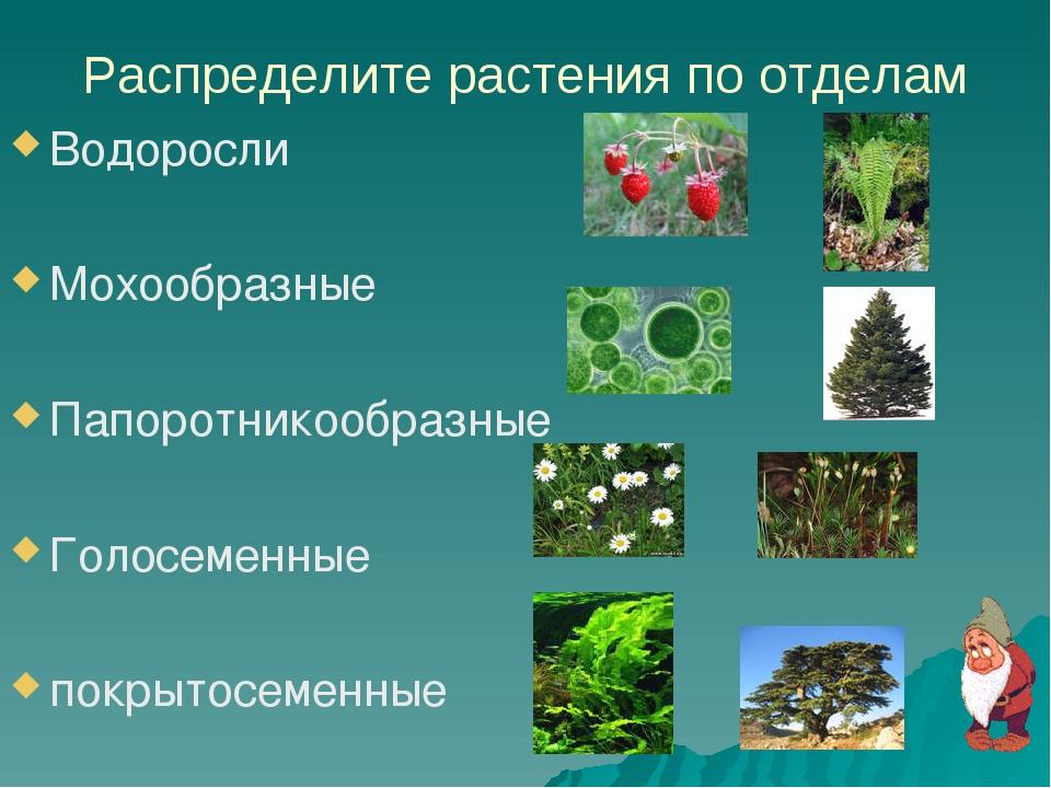Распределите растения по отделам Водоросли Мохообразные Папоротникообразные Г...