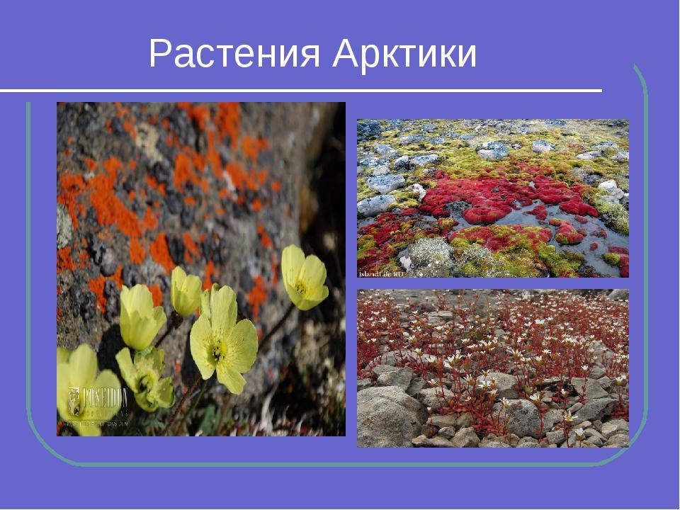 мемах растения арктики картинки с названиями система охлаждения