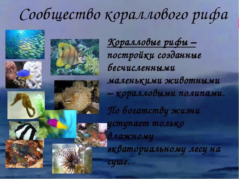 Коралловые рифы – постройки созданные бесчисленными маленькими животными – ко...