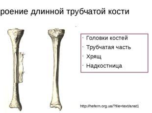 Строение длинной трубчатой кости Головки костей Трубчатая часть Хрящ Надкостн