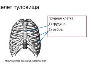 Скелет туловища Грудная клетка: 1) грудина; 2) ребра. http://www.med-site.nar