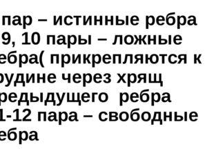 7 пар – истинные ребра 8,9, 10 пары – ложные ребра( прикрепляются к грудине ч