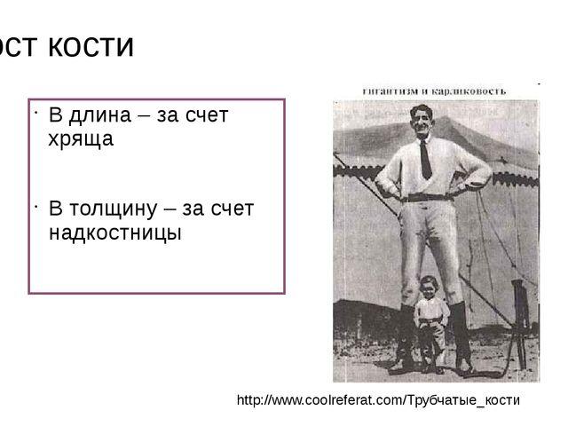 Рост кости В длина – за счет хряща В толщину – за счет надкостницы http://www...