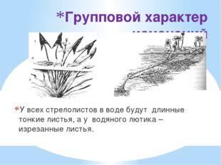 Групповой характер изменений У всех стрелолистов в воде будут  длинные тонки