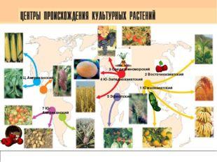 Карта центров происхождения культурных растений