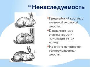 Ненаследуемость Гималайский кролик с типичной окраской шерсти. К выщипанном