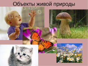 Объекты живой природы