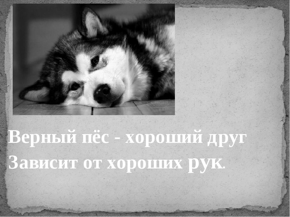Верный пёс - хороший друг Зависит от хороших рук.