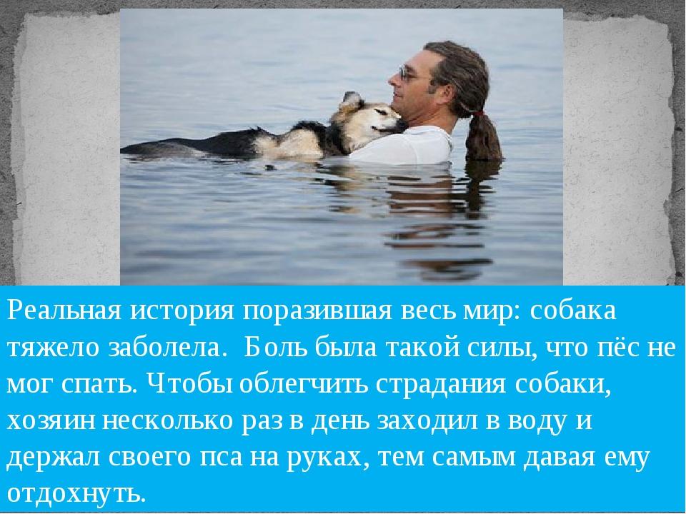 «Если собака – это всё, что у тебя есть, ты всё равно богатый человек». Луис...