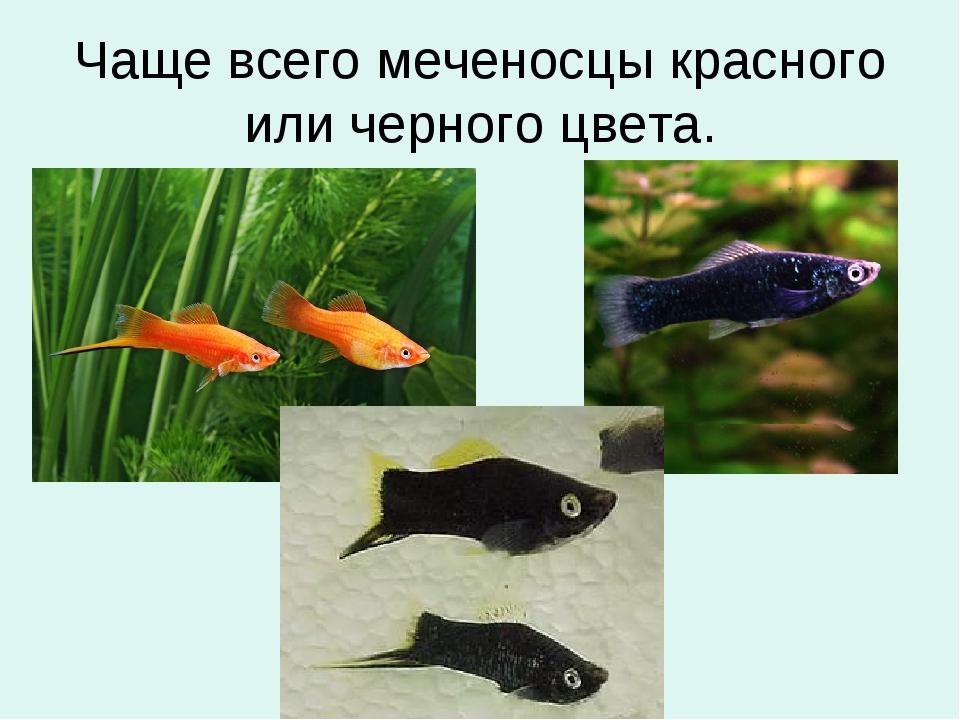 Чаще всего меченосцы красного или черного цвета.