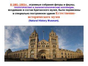 В 1881–1883гг. огромные собрания флоры и фауны, геологические и палеонтологич