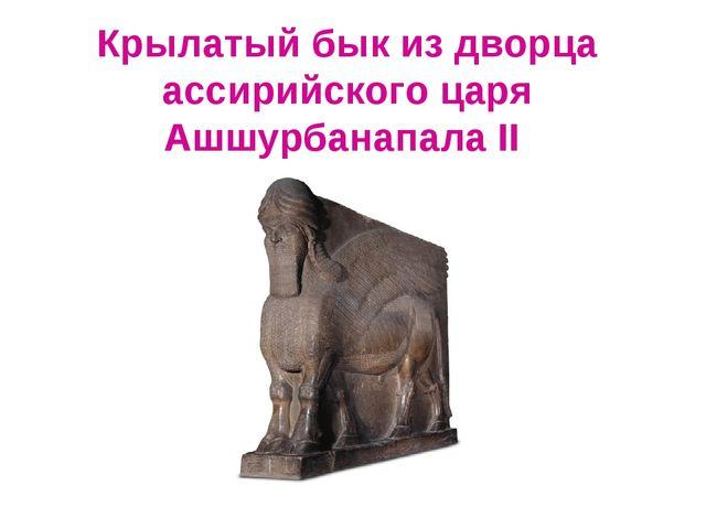 Крылатый бык из дворца ассирийского царя Ашшурбанапала II