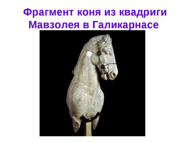Фрагмент коня из квадриги Мавзолея в Галикарнасе