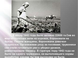 В весну 1942 года было засеяно 22600 га.Сев во многих колхозах вели на коров