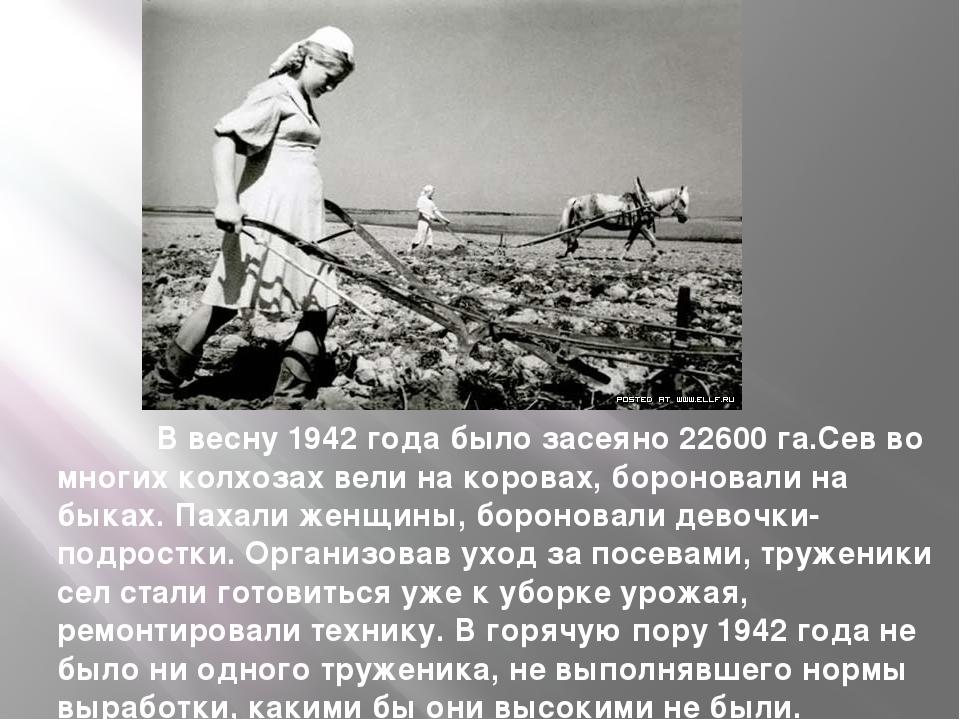 В весну 1942 года было засеяно 22600 га.Сев во многих колхозах вели на коров...
