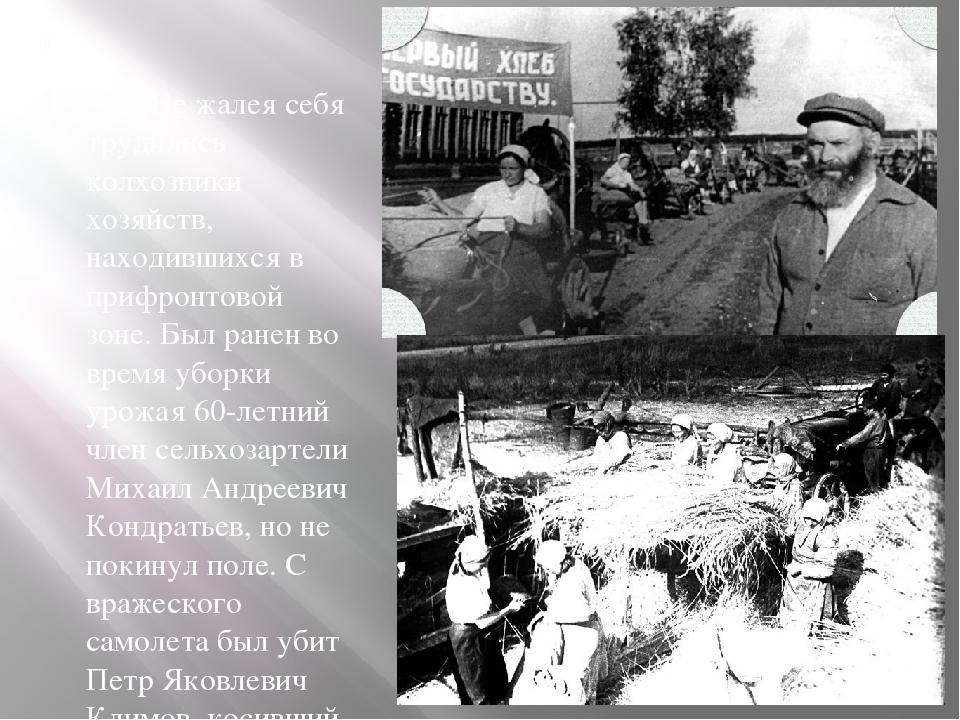 Не жалея себя трудились колхозники хозяйств, находившихся в прифронтовой зон...
