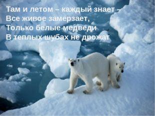 Там и летом – каждый знает – Все живое замерзает, Только белые медведи В теп