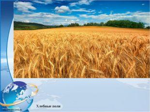 Хлебные поля