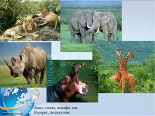 Львы, слоны, жирафы там, Носорог, гиппопотам.