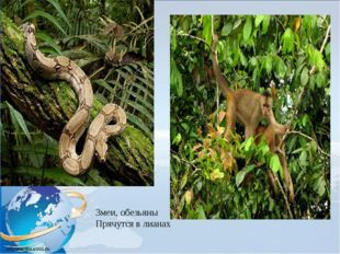 Змеи, обезьяны Прячутся в лианах