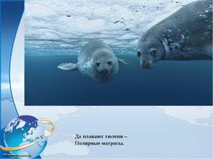 Да плавают тюлени – Полярные матросы.