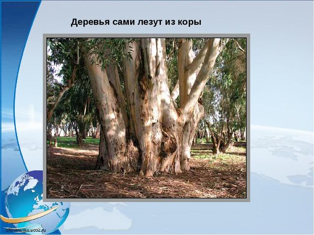 Деревья сами лезут из коры