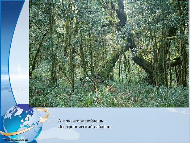 А к экватору пойдешь – Лес тропический найдешь.