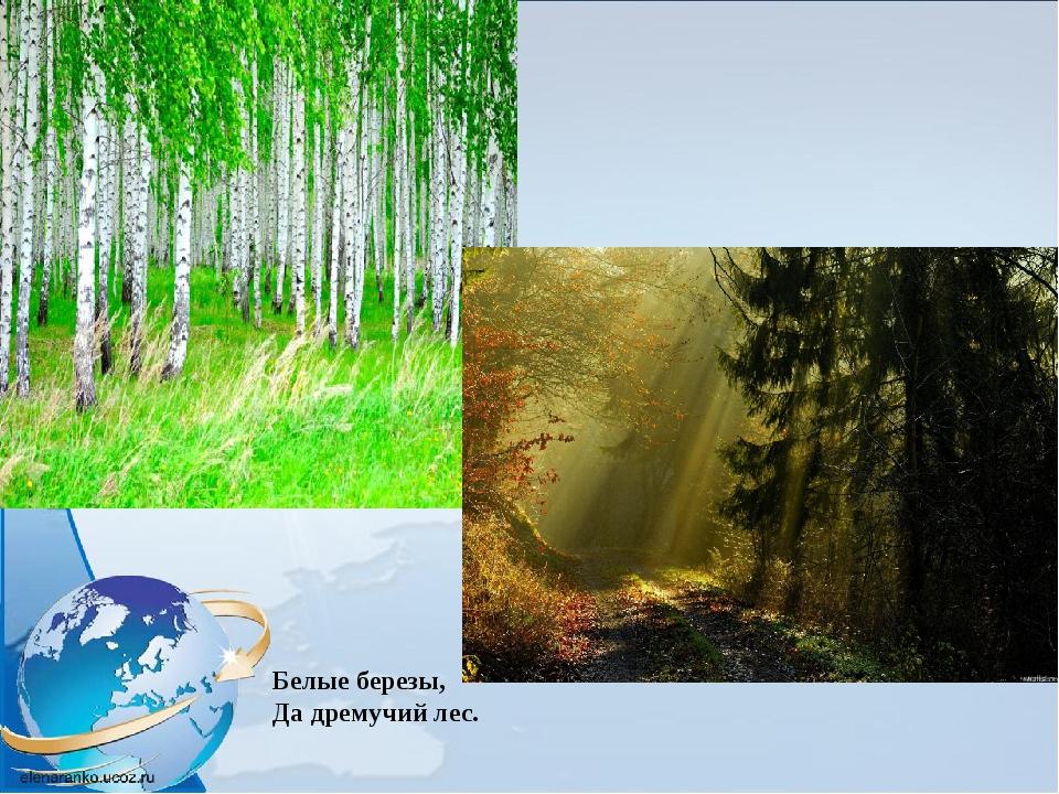 Белые березы, Да дремучий лес.