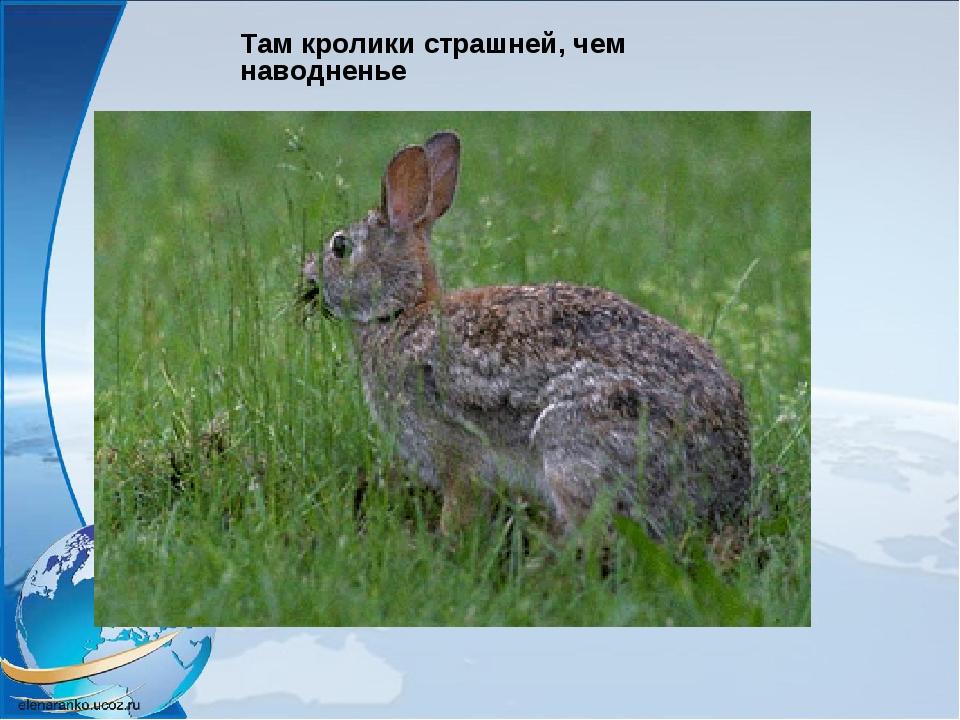 Там кролики страшней, чем наводненье