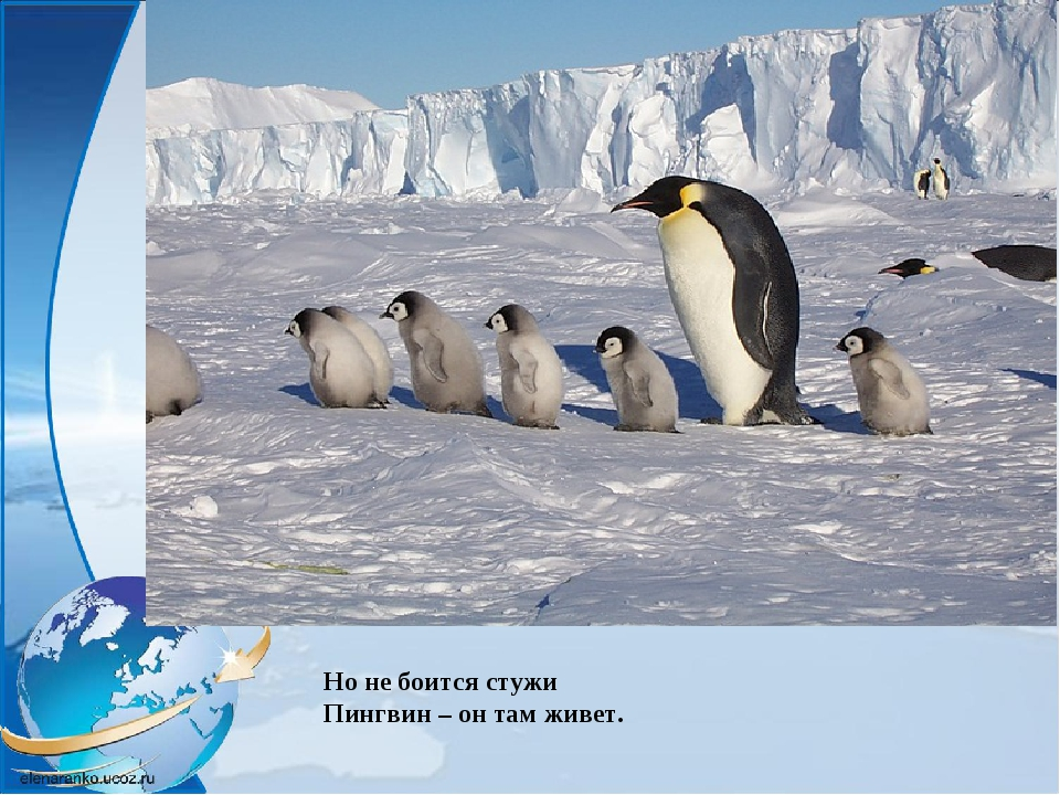 Но не боится стужи Пингвин – он там живет.