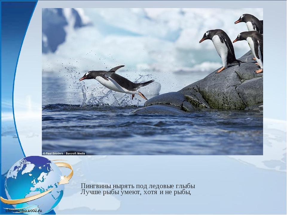 Пингвины нырять под ледовые глыбы Лучше рыбы умеют, хотя и не рыбы,