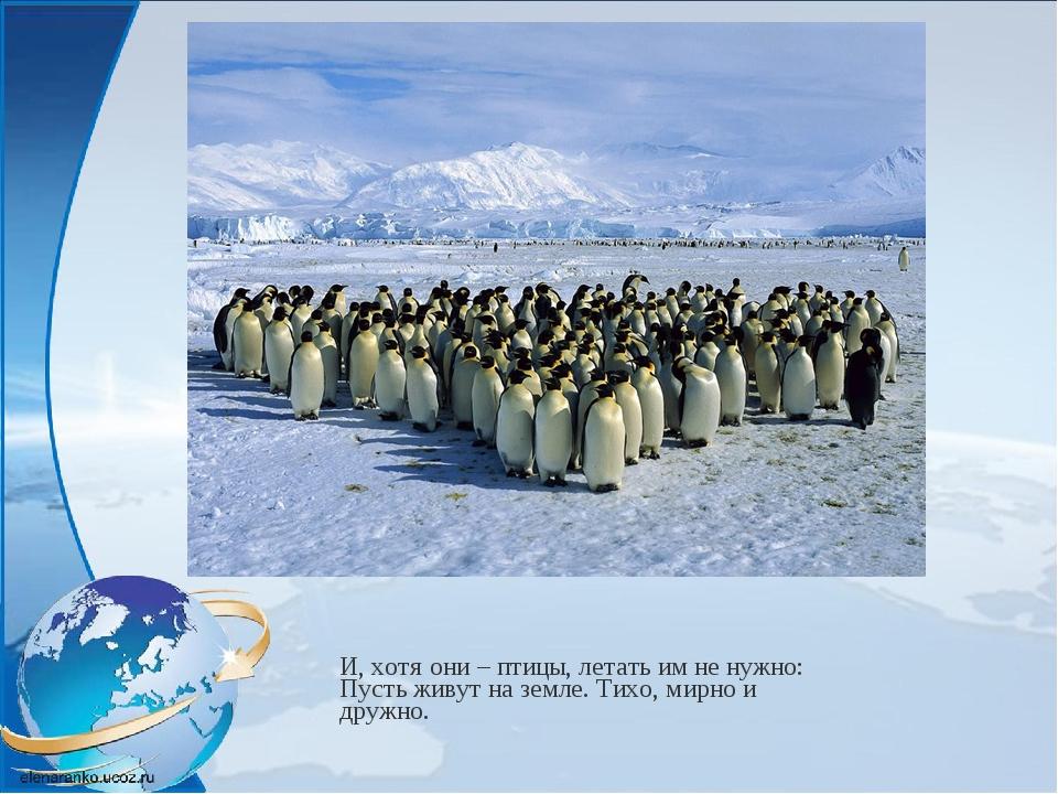 И, хотя они – птицы, летать им не нужно: Пусть живут на земле. Тихо, мирно и...