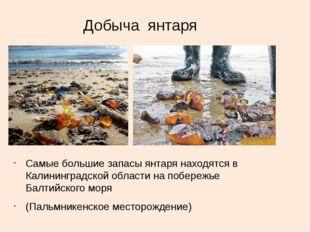Добыча янтаря Самые большие запасы янтаря находятся в Калининградской области