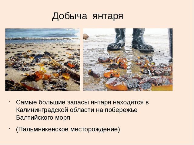 Добыча янтаря Самые большие запасы янтаря находятся в Калининградской области...
