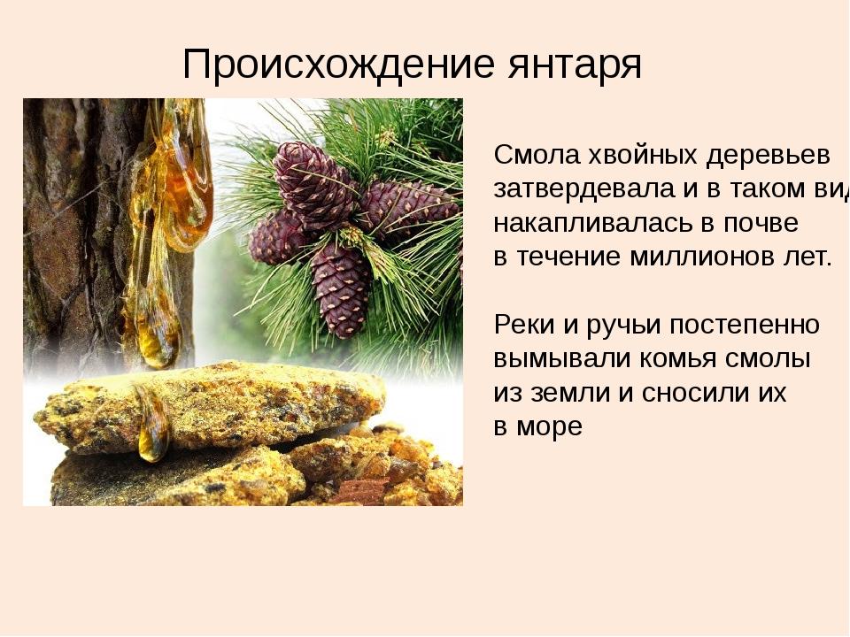 Происхождение янтаря Смола хвойных деревьев затвердевала и в таком виде накап...