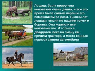 Лошадь была приручена человеком очень давно, и все это время была самым перв