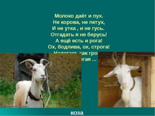Молоко даёт и пух. Не корова, не петух, И не утка , и не гусь. Отгадать я не