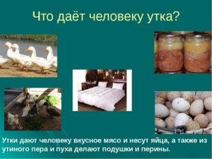 Что даёт человеку утка? Утки дают человеку вкусное мясо и несут яйца, а также