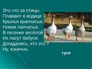 Это что за птицы Плавают в водице ? Крылья крапчатые, Ножки лапчатые. В песе