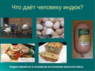 Что даёт человеку индюк? Индюк является в основном источником вкусного мяса.