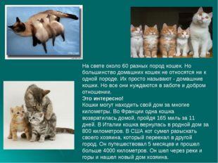 На свете около 60 разных пород кошек. Но большинство домашних кошек не относ