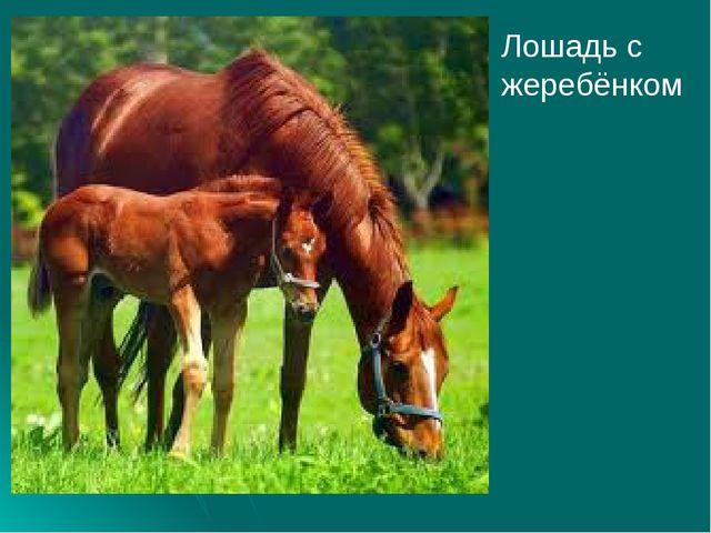 Лошадь с жеребёнком