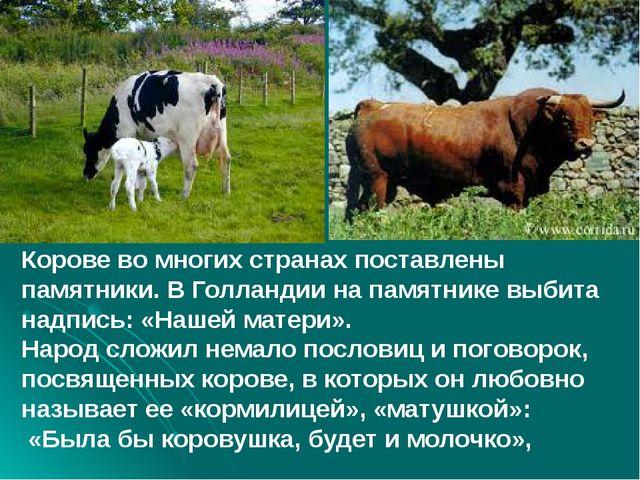 Корове во многих странах поставлены памятники. В Голландии на памятнике выби...