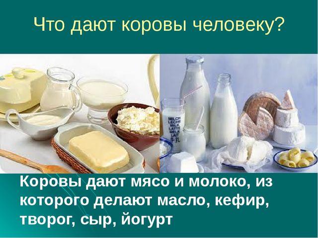 Что дают коровы человеку? Коровы дают мясо и молоко, из которого делают масло...