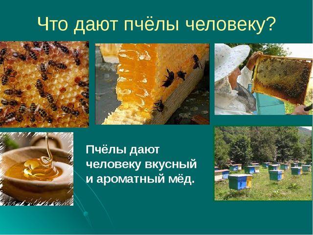 Что дают пчёлы человеку? Пчёлы дают человеку вкусный и ароматный мёд.