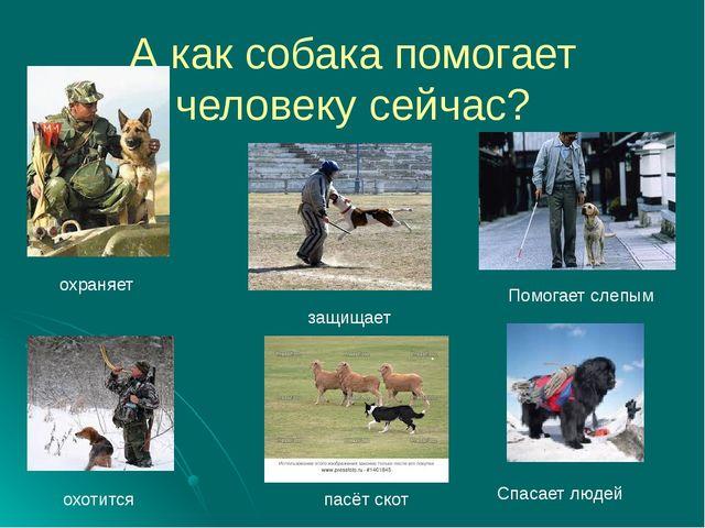 А как собака помогает человеку сейчас? охраняет охотится пасёт скот Помогает...