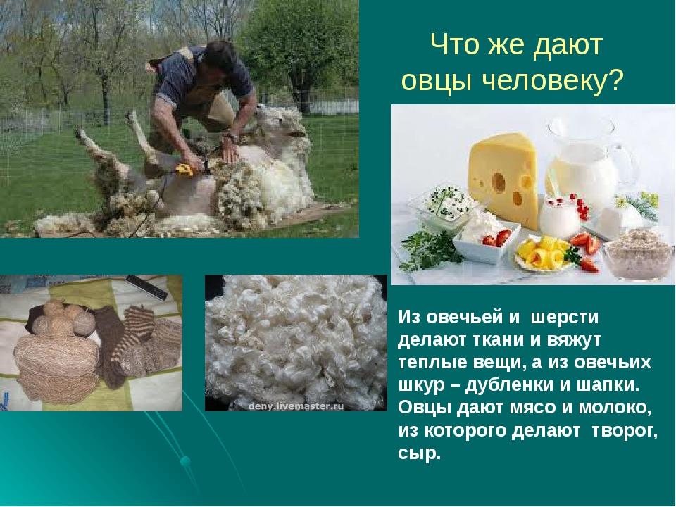 Что же дают овцы человеку? Из овечьей и шерсти делают ткани и вяжут теплые ве...