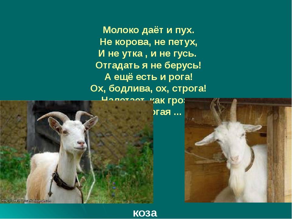 Молоко даёт и пух. Не корова, не петух, И не утка , и не гусь. Отгадать я не...