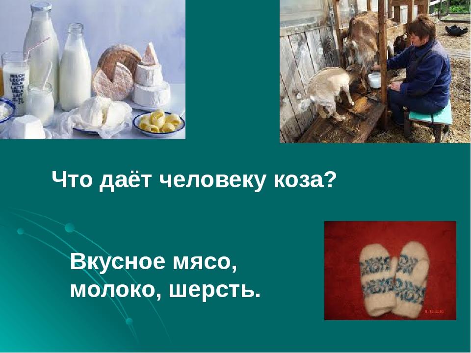 Что даёт человеку коза? Вкусное мясо, молоко, шерсть.