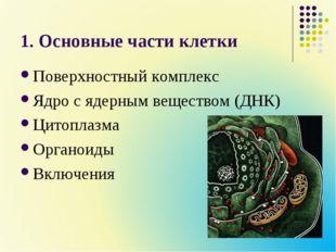1. Основные части клетки Поверхностный комплекс Ядро с ядерным веществом (ДНК